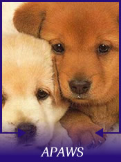 Animal Protection and Welfare Society