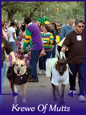 Krewe of Mutts