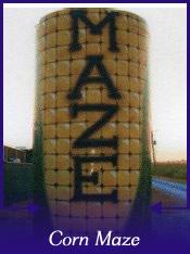 Cajun Country Corn Maze